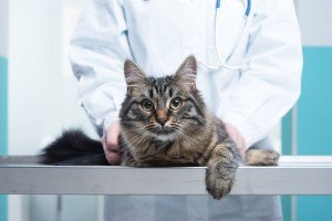 6 Ways To Save Money On Vet Bills