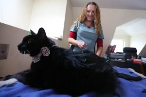 Alternative Medicine For Cats With Cancer?