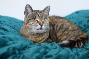 Bright Future For Blind Cats: Blind Cat Rescue