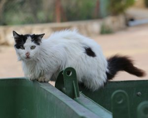 Keeping Cats Safe: Hidden Danger Of Household Toxins In Your Trash