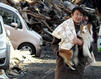 Help animals displaced by Japan's earthquake and tsunami