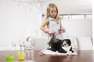 Managing Cat Allergens In The Home