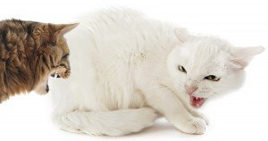 Fear, phobia, and anxiety in cats