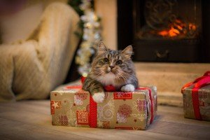 Important Holiday Safety Reminder For Cats