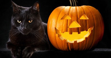 Black cats have never had it easy. In some cultures \u2014 and for many  individuals \u2014 they represent bad luck or misfortune. Like black dogs,  they\u0027re often