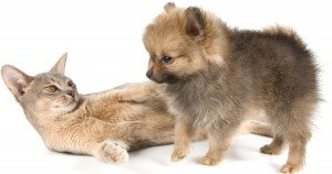 Cat breeds: Largest, smallest, and most dog like