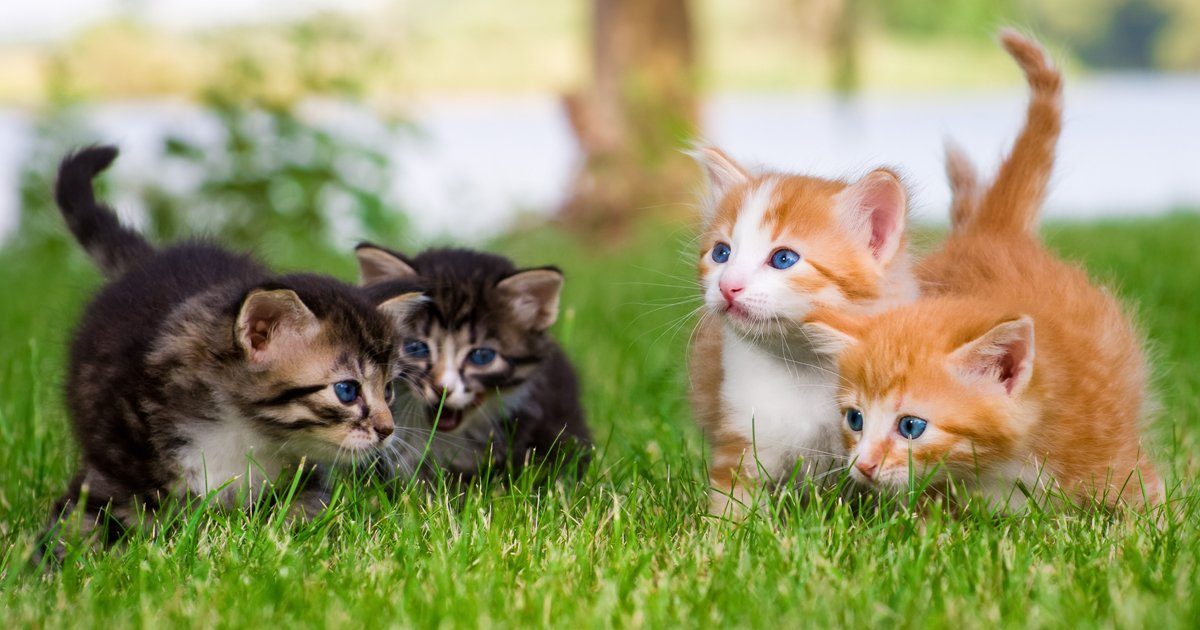 Natural Names For Cats