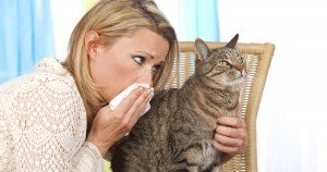 Cats and allergies: A primer