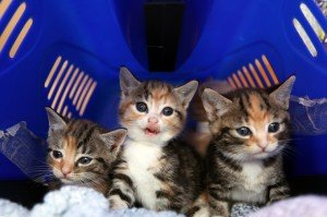 Kittens And What To Expect