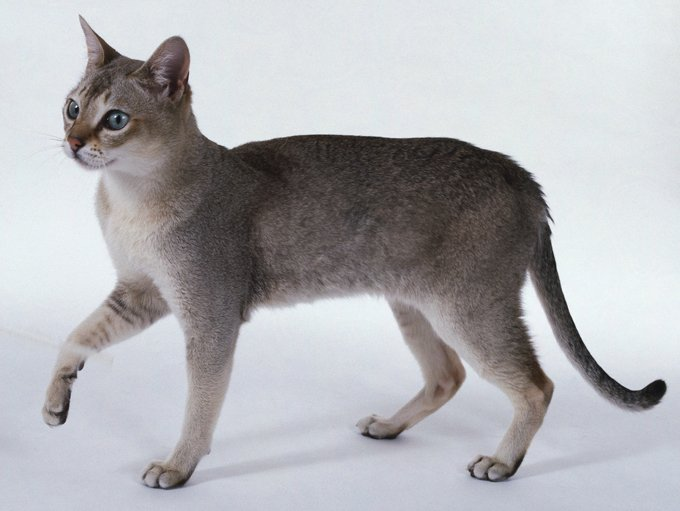 Know Your Cat Breeds Largest Smallest And Most Dog Like