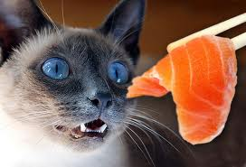Raw food diet for cats: recommended or ridiculous?