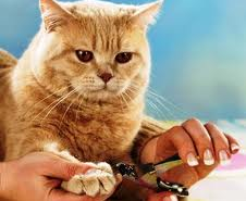 Trimming your cat's nails