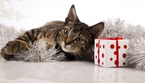 Cat Lovers Holiday Gift Guide: Gadgets, Contraptions, And Keepsakes