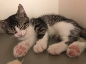 Tabby's Place Cat Rescue: Helping The Hopeless