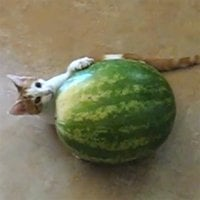 CatTime video of the week: Cat vs. watermelon