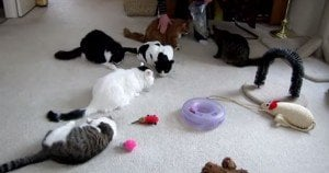 Six Cats At A Catnip Party [VIDEO]
