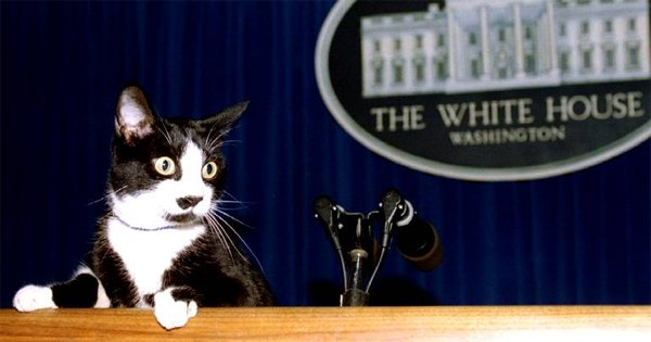 Cats In The White House Cattime