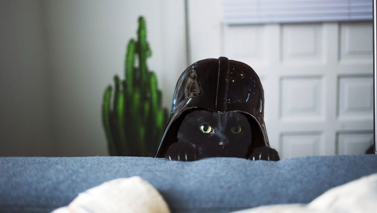 cat with darth vader helmet