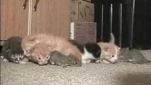 Cat Adopts Baby Squirrels [VIDEO]