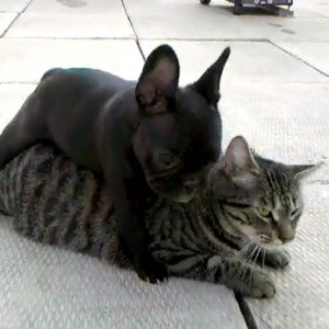 Five cat and dog videos for Friday, April 27, 2012