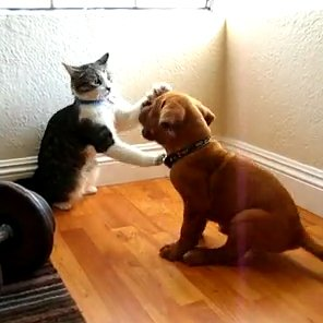 Cat And Puppy Playing [VIDEO]