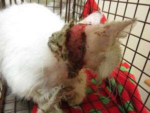 Cat burned by acid faces long road to recovery