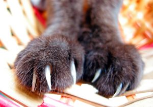 Declawing Cats: More Than Just A Manicure