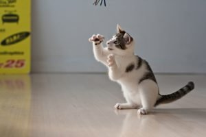 Why Do People Opt To Declaw Their Cats?