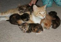 Heroic mama cat protects kittens under fire
