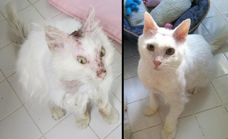 Check in with Snow, acid-burn victim