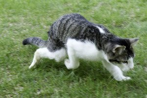 Check in with Corky — the cat with twisted legs