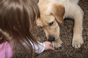 Florida domestic violence shelter to allow pets