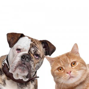 Best and worst states for animal protection laws in 2011