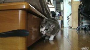 Games For Cats: Catch The Feather [VIDEO]