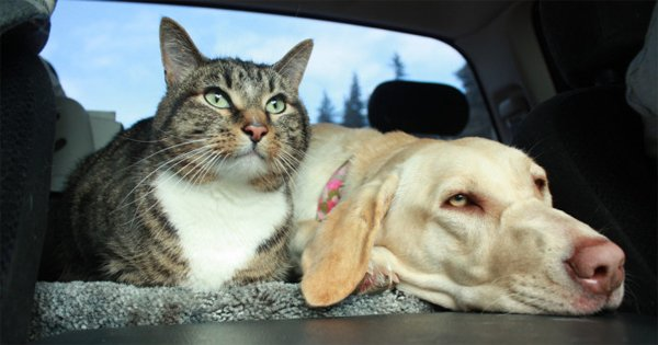 file_4111_road-trip-with-pets