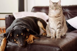 Dog People & Cat People: Are There Really Differences?