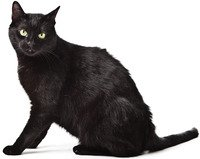Cleveland area black cat adoption special October 5-6