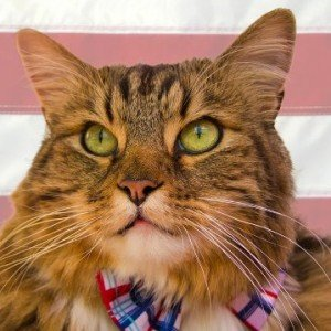 Hank the Cat gets 6,000+ votes in U.S. Senate bid