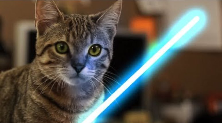 Kitten Uses The Force Star Wars Video Cattime