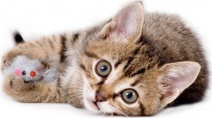 10 Safe Ways For Your Cat To Play