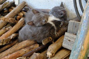 National Feral Cat Day: What You Need To Know