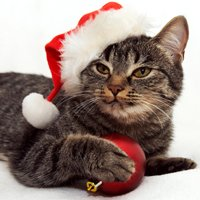 CatTime's 2013 Holiday Gift Guide