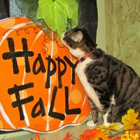 Winners of the Fall Fun Photo Contest
