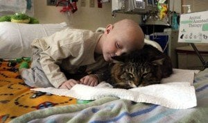 Why Cats Are The Best Therapists And Therapy Pets