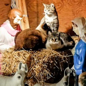 Stray pets take shelter in local nativity scenes