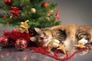 Best Ways To Spend The Holidays With Your Cat