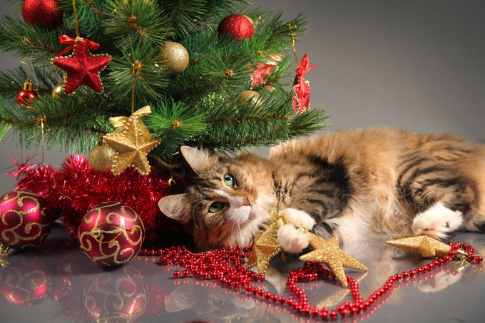Best Ways To Spend The Holidays With Your Cat Cattime