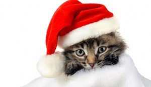 20 Christmas Kittens Who Are Ready For Santa [PICTURES]