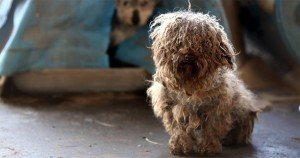 More than 180 animals rescued from Arkansas puppy mill