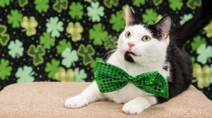 St. Patrick's Day Safety For Your Cat